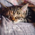 ペット(犬猫)との旅行で薬の代わりに持っていくと便利な自然療法(クレイ)
