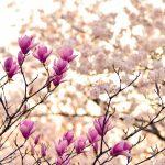 春に肌荒れ・アトピーの症状が悪化しないために今すべきこと