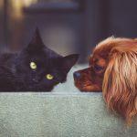 ペット(犬・猫など)の健康管理と自然療法。ペットとともに暮らす